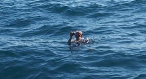 W morzu zyja delifiny i paparazzi